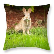 Young Healthy Wild Rabbit Eating Fresh Grass From Yard  Throw Pillow