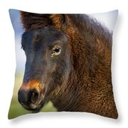 Young Icelandic Horse Throw Pillow