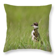 Young Killdeer In Grass Throw Pillow