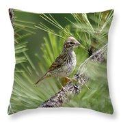 Young Lark Sparrow 2 Throw Pillow