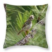 Young Lark Sparrow 3 Throw Pillow