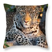 Young Leopard Throw Pillow