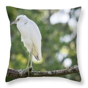 Young Little Blue Heron Throw Pillow