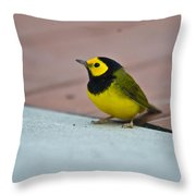 Young Male Hooded Warbler 1 Throw Pillow