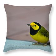 Young Male Hooded Warbler 3 Throw Pillow