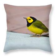 Young Male Hooded Warbler 4 Throw Pillow