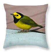 Young Male Hooded Warbler 5 Throw Pillow