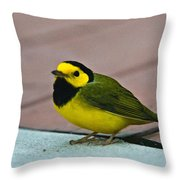 Young Male Hooded Warbler 6 Throw Pillow