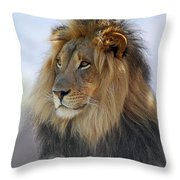 Young Male Lion Throw Pillow by Howard Bagley