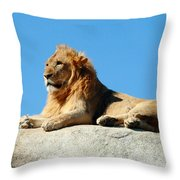Young Male Lion Reclining On A Rock Throw Pillow