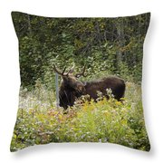 Young Male Moose Throw Pillow