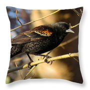 Young Male Red-winged Black Bird Throw Pillow