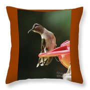Young Male Ruby-throated Humminngbird Throw Pillow