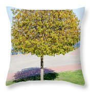 Young Maple Tree Throw Pillow