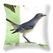 Young Northern Mockingbird Throw Pillow