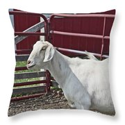 Young Old Goat White And Grayish Red Fence And Gate Barn In Close Proximity 2 9132017 Throw Pillow
