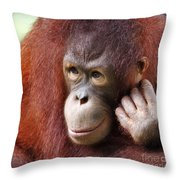 Young Orang Utan Looking Thoughtful Throw Pillow