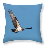 Young Osprey Flies With Its Breakfast Throw Pillow