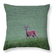 Young Pomfret Summer Buck Throw Pillow