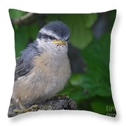 Young Red-breasted Nuthatch No. 1 Throw Pillow