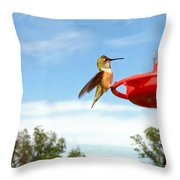 Young Rufous Throw Pillow