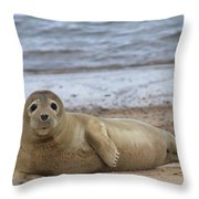 Young Seal Pup On Beach - Horsey, Norfolk, Uk Throw Pillow