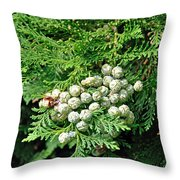 Young Seed Cones Of Lawson Cypress Throw Pillow