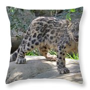 Young Snow Leopard Throw Pillow