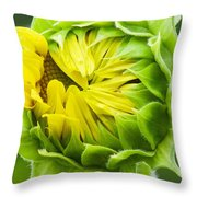 Young Sunflower Throw Pillow