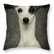 Young Whippet In Black And White Throw Pillow