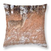 Young White-tailed Deer In The Snow Throw Pillow