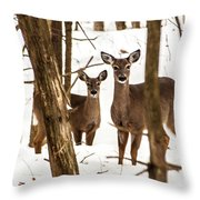 Your Looking At Me Throw Pillow