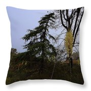 Yucca Filamentosa Rainy Day In Malibu Throw Pillow