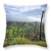 Yucca Hill Throw Pillow