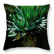 Yucca  Throw Pillow