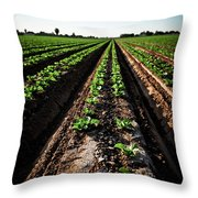 Yuma Lettuce Throw Pillow