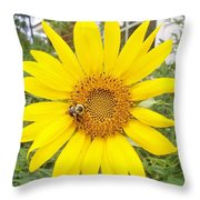 Yummy Sunflower Throw Pillow