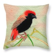 Zanzibar Red Bishop Throw Pillow