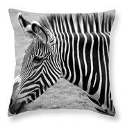 Zebra - Here It Is In Black And White Throw Pillow