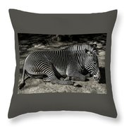 Zebra 2 Throw Pillow