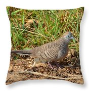 Zebra Dove Throw Pillow