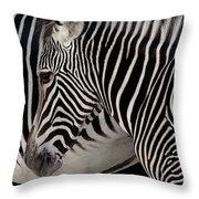 Zebra Head Throw Pillow by Carlos Caetano
