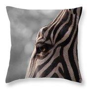 Zebra I Throw Pillow
