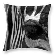 Zebra In Black And White Throw Pillow