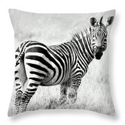 Zebra In The African Savanna Throw Pillow
