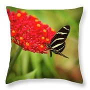 Zebra Long Wing Butterfly Throw Pillow