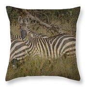 Zebra On The Serengeti Throw Pillow