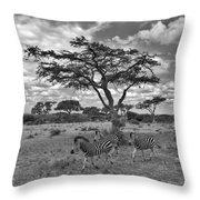 Zebra Running Through Savannah Throw Pillow