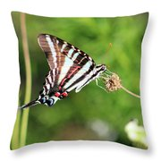 Zebra Swallowtail Butterfly In Garden 2016 Throw Pillow