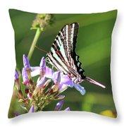 Zebra Swallowtail Butterfly On Phlox Throw Pillow